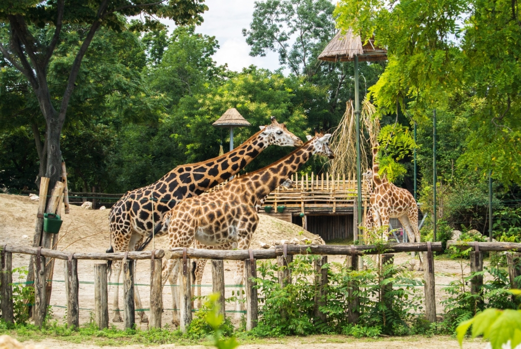 Zoo Budapest Ungarn